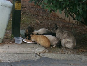 cats-p0009197
